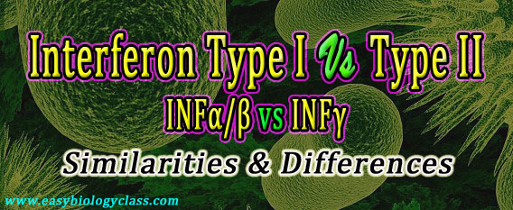 Difference between INF alpha beta and gamma