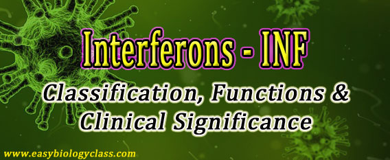 Functions Interferon