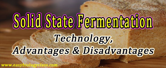 Solid-Substrate-Fermentation-SSF