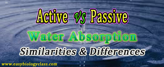 Active vs Passive Absorption of Water