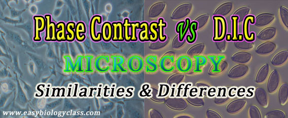 Phase Contrast vs DIC Microscopy