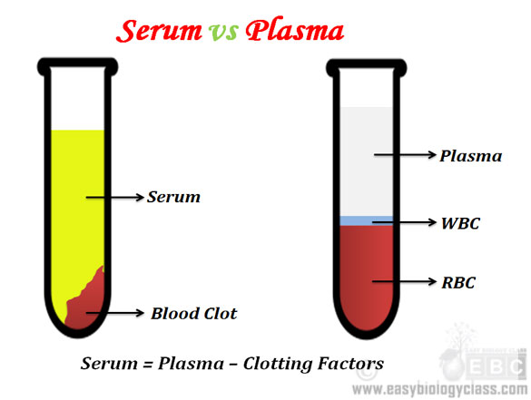 Difference between Serum and Plasma | easybiologyclass