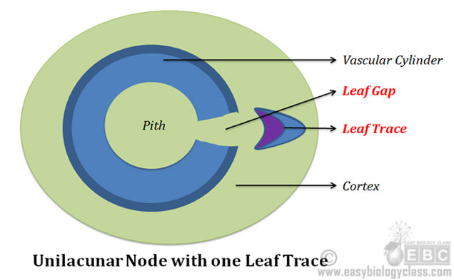 What is Unilacunar Node