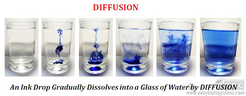 Difference Between Diffusion And Osmosis