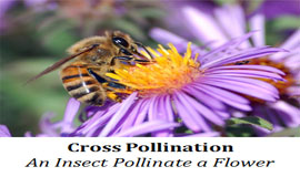 what is cross pollination