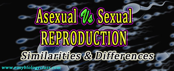 What are three differences between asexual and sexual reproduction