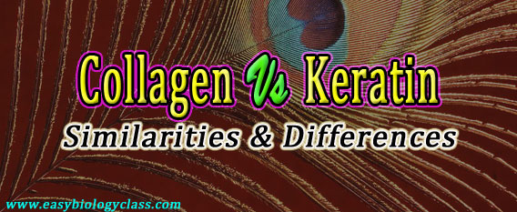Collagen vs Keratin
