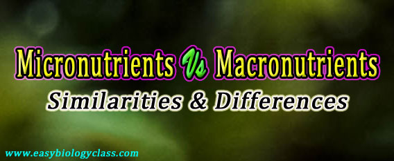 Micronutrients vs macronutrients