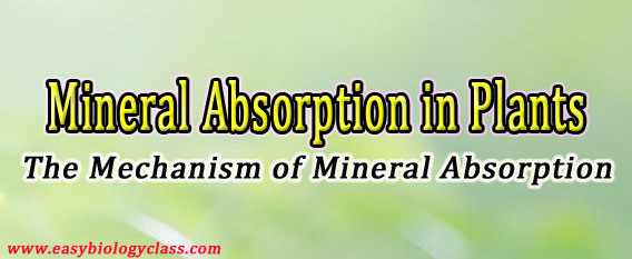 Passive and Active Mineral Absorption