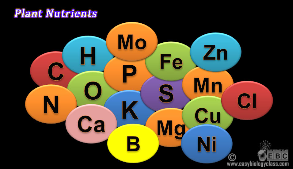 Mineral nutrients of plants