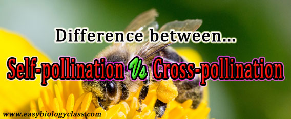 Compare self pollination and Cross pollination