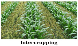 interfarming