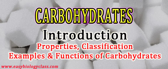Carbohydrates Biochemistry Short Notes | easybiologyclass