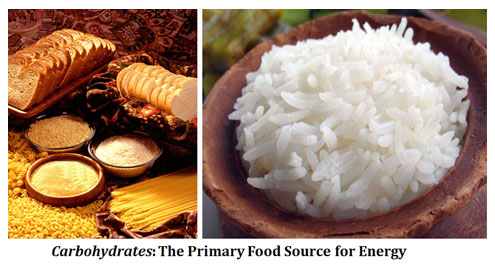 significance of carbohydrates