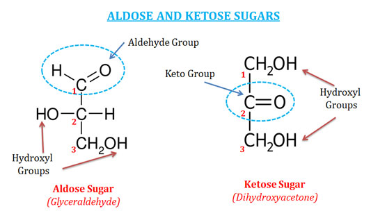 Simple Sugars Examples