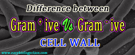 Compare Cell wall Gram Positive and negative