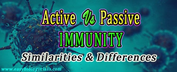 Compare active and passive immunity