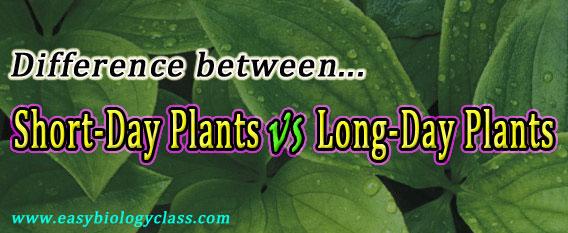Long day vs Short day Plants