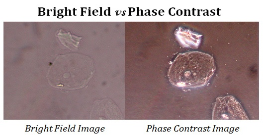 How to view unstained cells in microscope