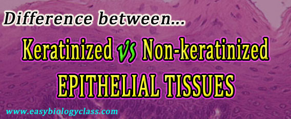 Keratinized vs Nonkeratinized Epithelium