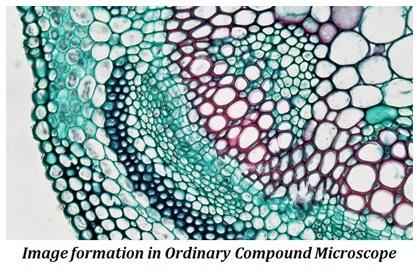 contrast in light microscopy