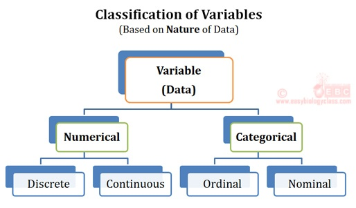 Numeric vs Categoric Data