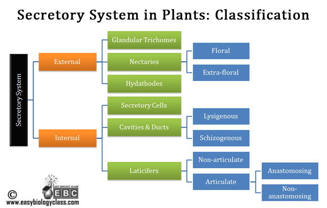 classification of plant secretory cells
