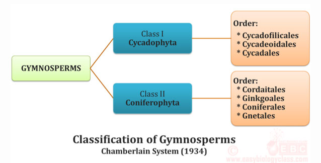 Chamberlain System of Classification