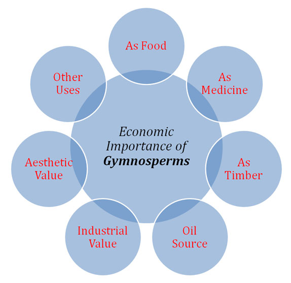 gymnosperms economic aspects