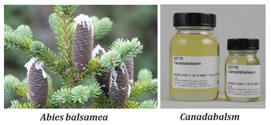 uses of canadabalsam