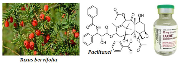 what is paclitaxel
