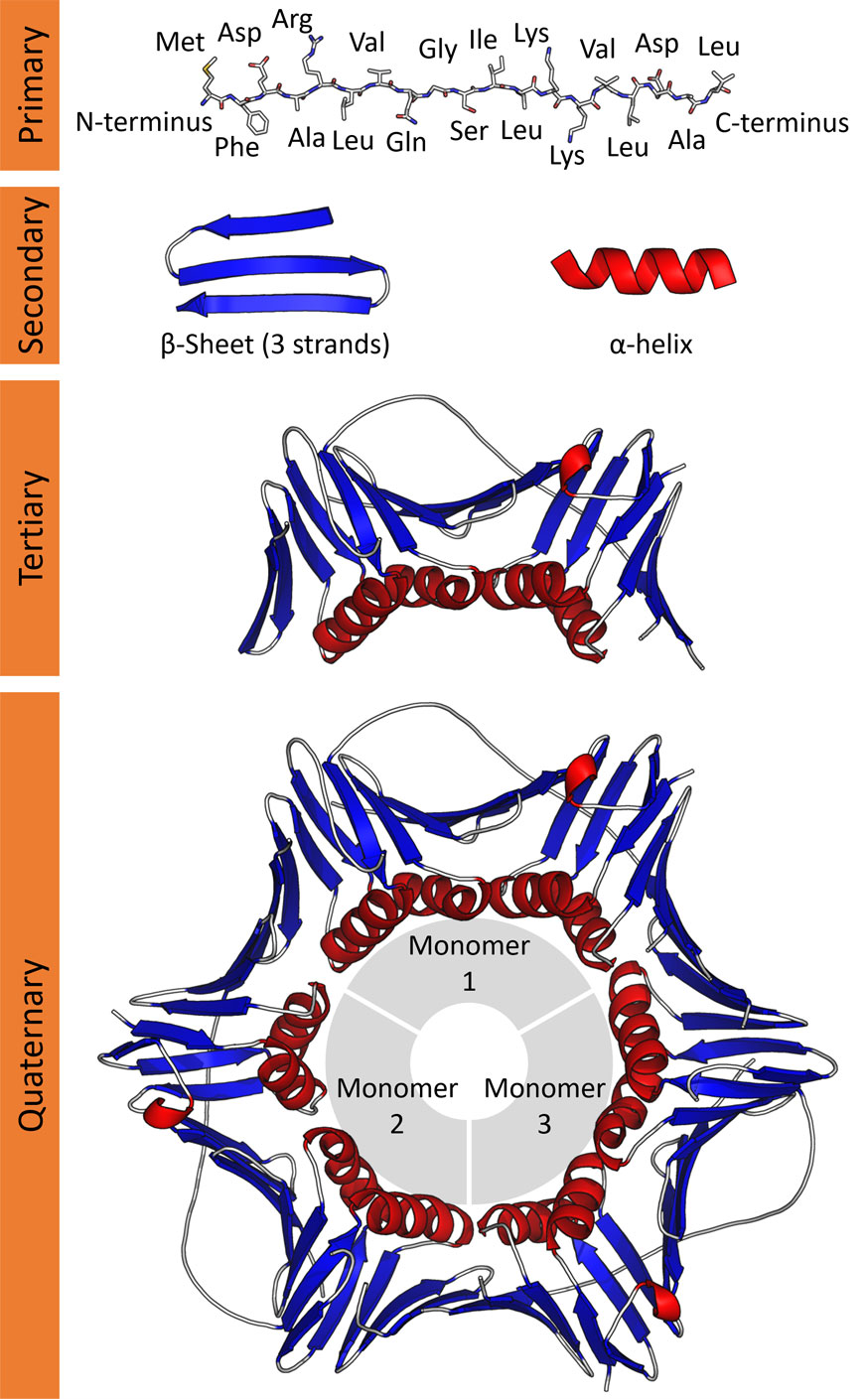 all 4 levels of protein structure
