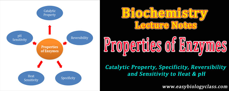 Properties of Enzymes Short Notes | easybiologyclass