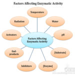 effect of pH on enzymatic activity