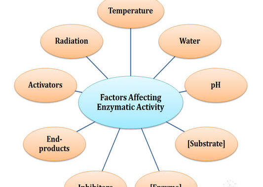Factors Affecting Enzymatic Activity | Easy Biology ClassEasy Biology Class
