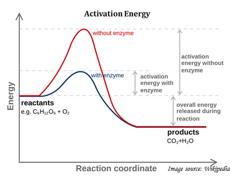 how enzyme reduce activation energy